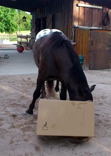 Kurt untersucht den Pappkarton