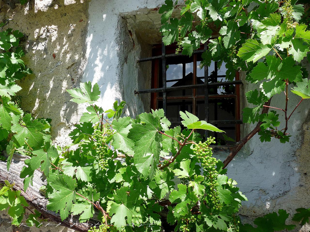 Weinfenster