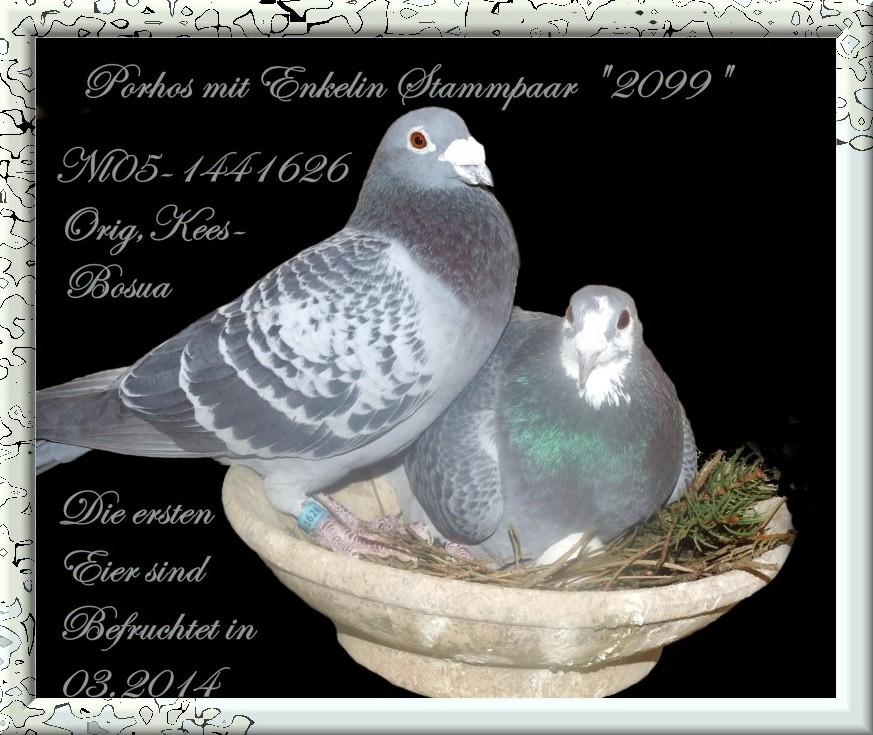 "Musketier Porhos NL 05 1441626 mit Enkelin Stammpaar DV ""2099"""