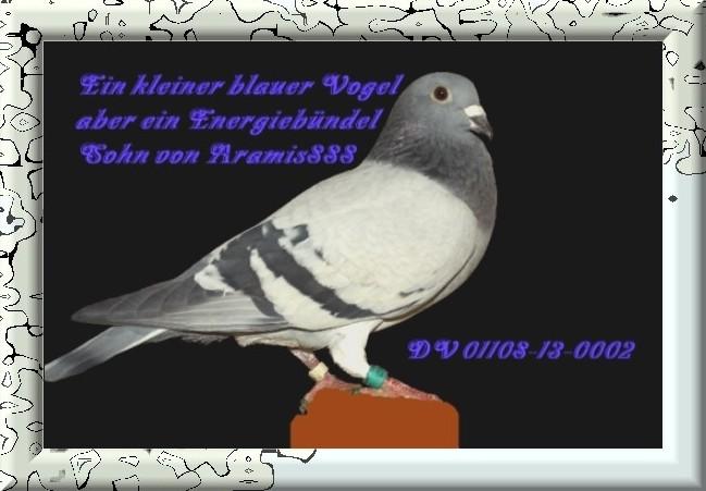 Sohn Musketier Aramis 888 DV 01108-13-0002 Blau