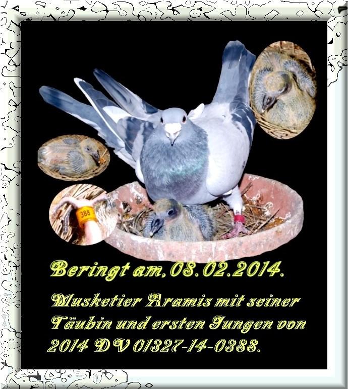 Musketier Aramis Nl 04-2097888 Blau