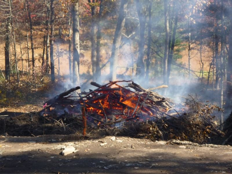 burning of the branches and some rootstock