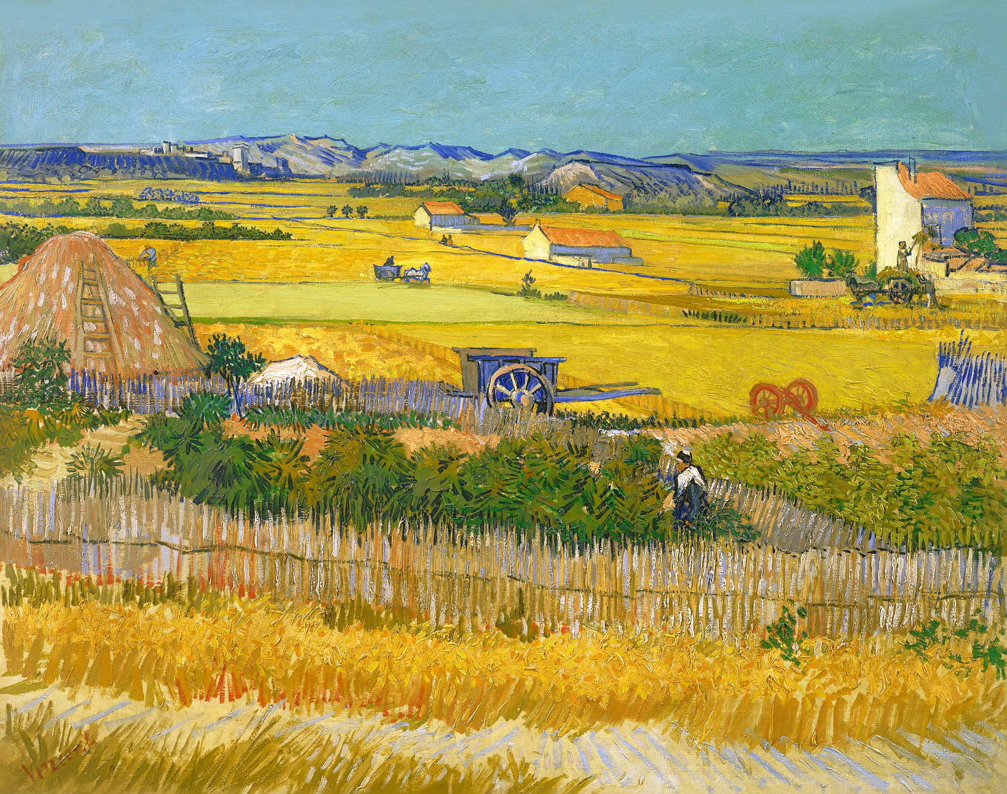 The harvest (1)