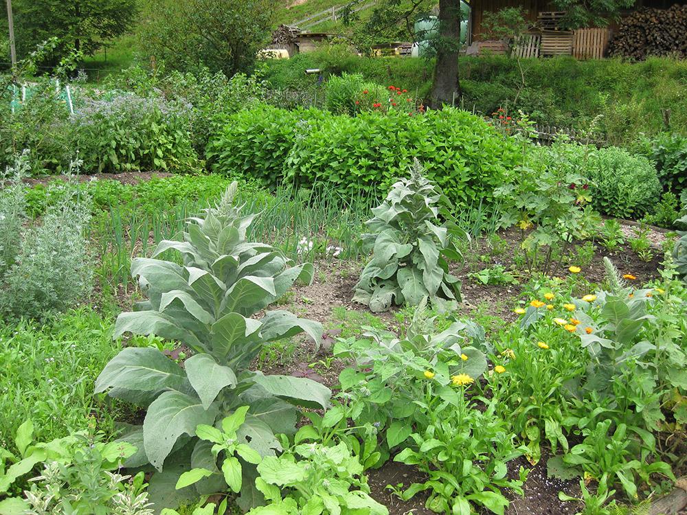 Der preisgekrönte Garten