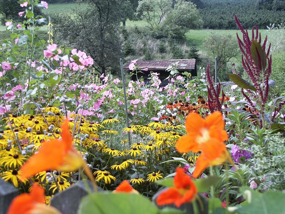 Sommerstauden im Bauerngarten Vorderhof