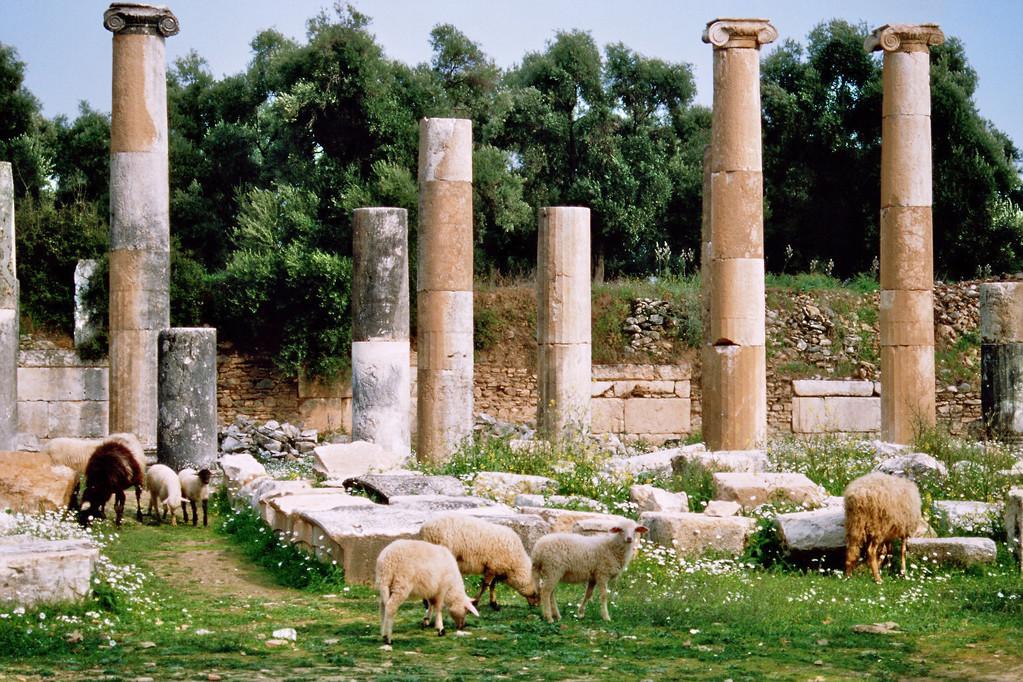 Ruinen von Nysa mit Schafen