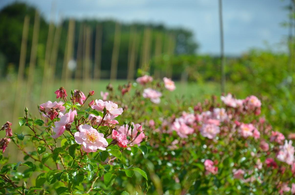 En fleur tout l'été Les Yeux d'Elsa by Creamelarosa