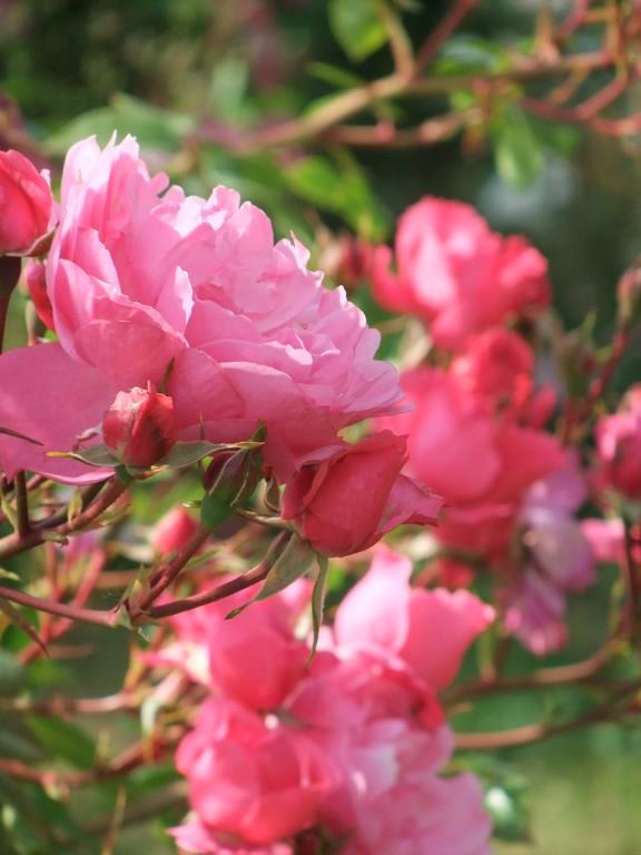 De larges bouquets de fleurs doubles, même pour le vase.