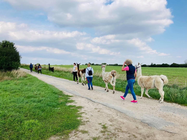 NDR Podcast: Unterwegs mit Lamas und Alpakas von Katharina Jetter