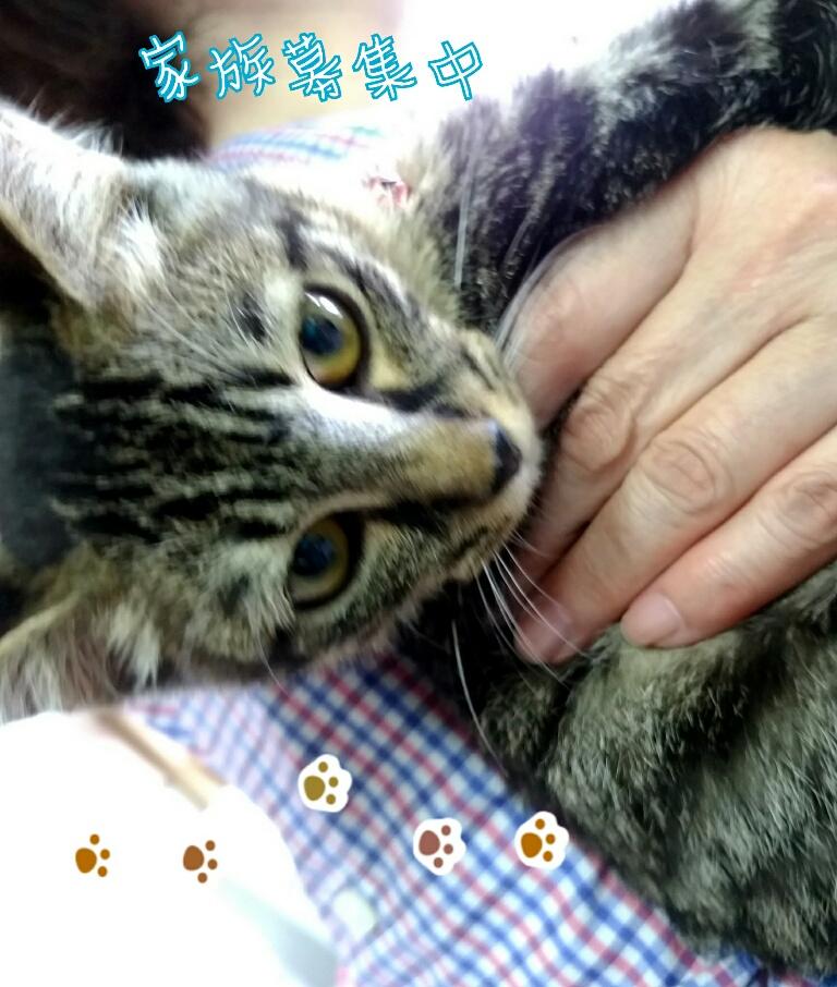 9/8(日) 保護猫譲渡会