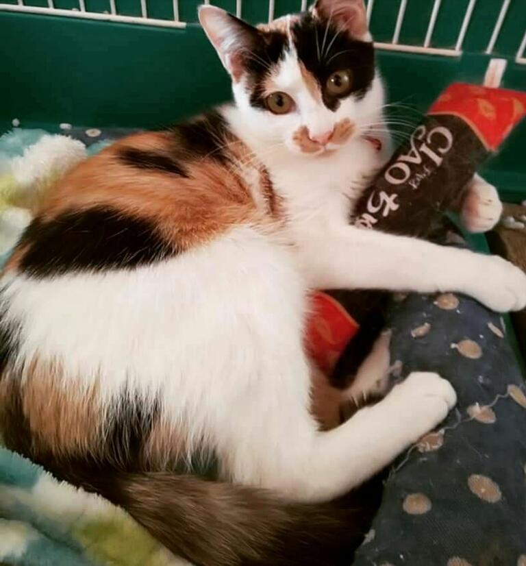 11月 保護猫譲渡会