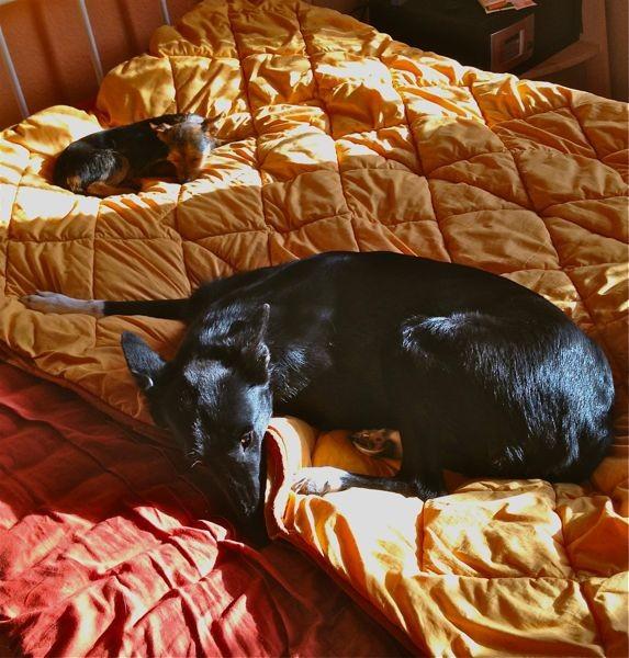einfach schön - im Bett in der Sonne liegen!