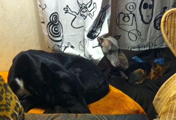huhuuuu - Bella hinterm Vorhang - sie sind satt und ruhen jetzt...
