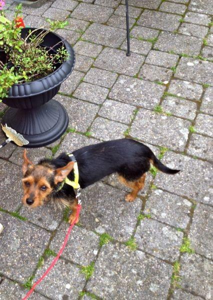 Angelinas erster Spaziergang in unserem Garten