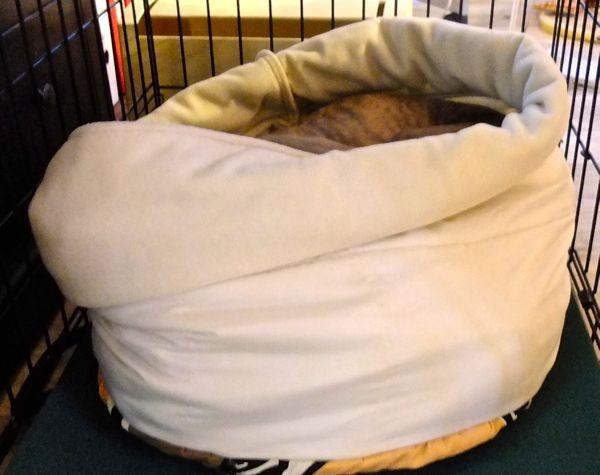 deshalb heißt das 'Kuschelsack' - Bella kuschelt sich richtig rein