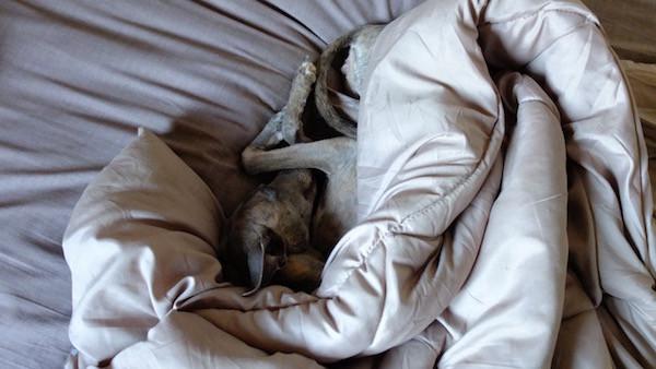 Bella sucht immer 'Bettwärme'
