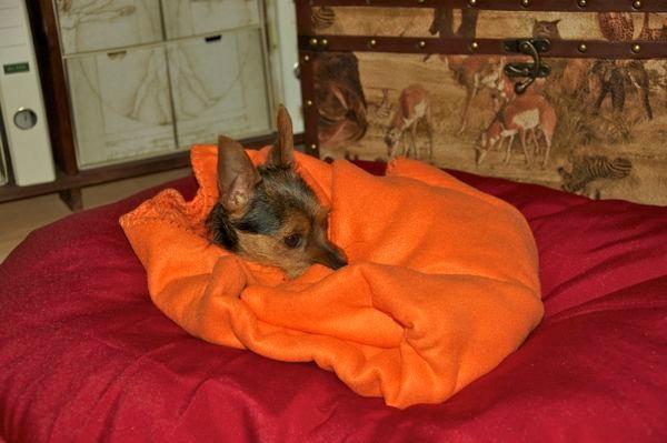in der warmen Decke noch ein bisschen kuscheln