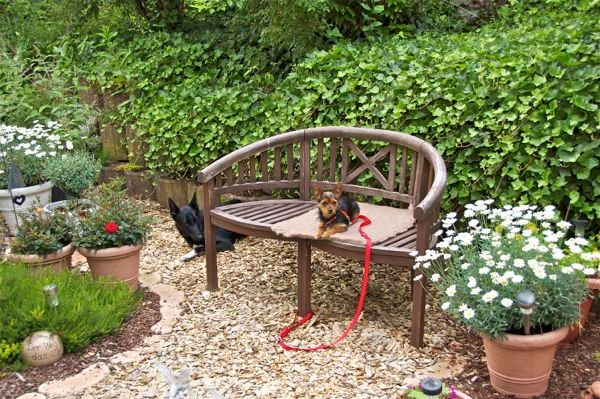 meine beiden bewachen den Garten und ich pflege meine Blumen