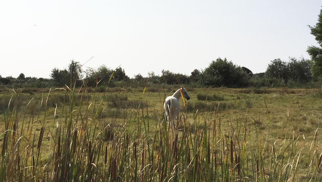 A la découverte de la Camargue sauvage avec la Manade Laurent