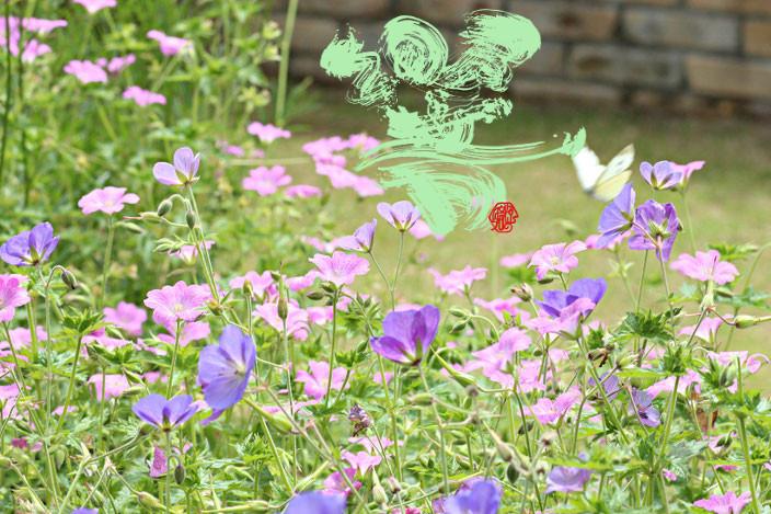 癒しの写真「庭で飛び交う蝶」