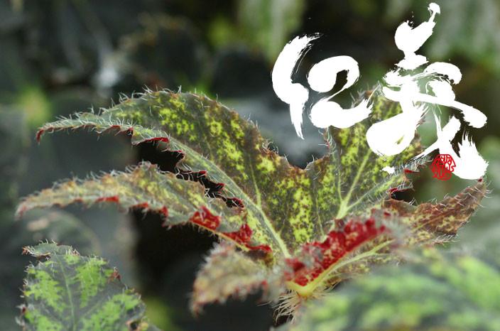 癒しの写真「葉も絵になる」
