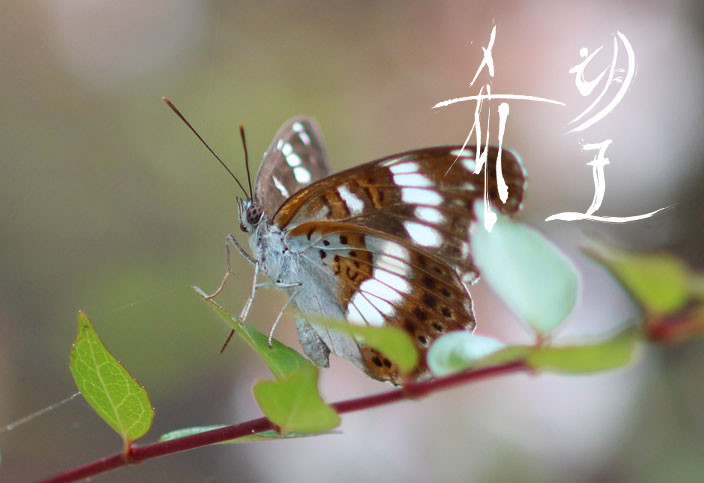 癒しの写真「孵化した蝶」