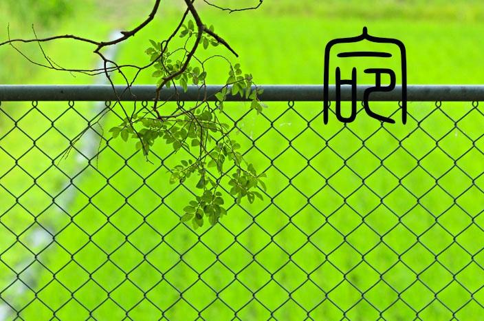 癒しの写真「新緑」
