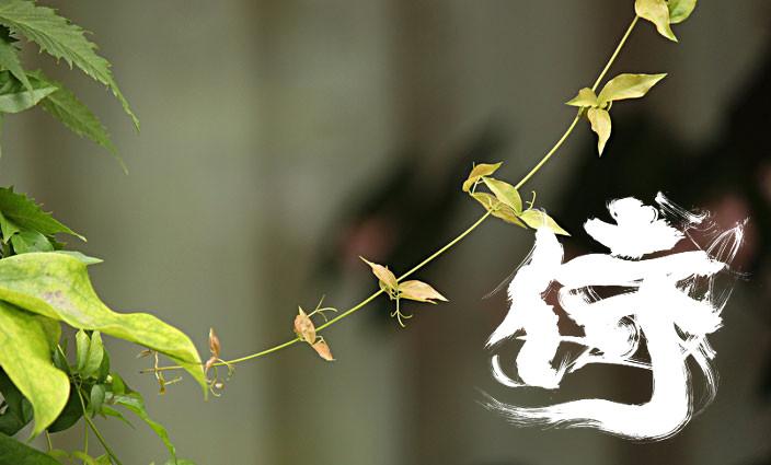 癒しの写真「庭」