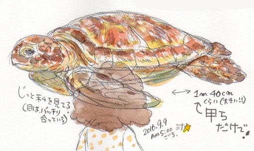 夢スケッチ:ウミガメのアップ
