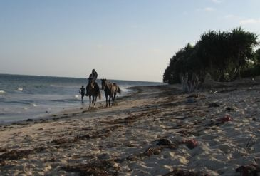 Am wunderbaren und ruhigen Strand von Msumarini