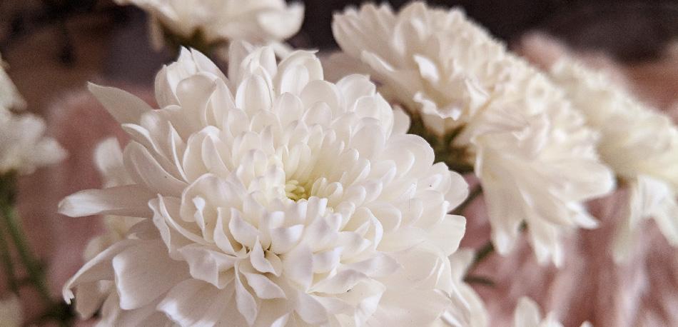Pink Blumen Talent