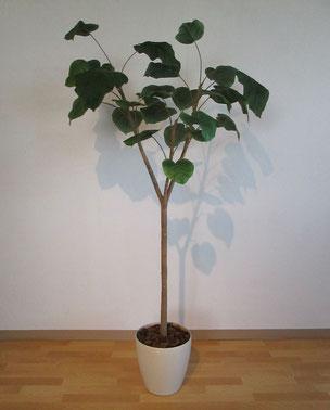 インテリアグリーン フェイクグリーン 人工樹木 インテリア 栃木県家具 東京デザインセンター