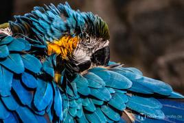 Papagei im Tierpark Gotha