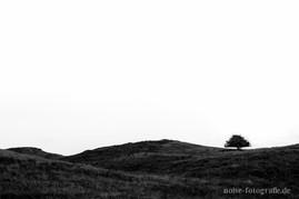 ein einsamer Baum auf der Insel Hiddensee