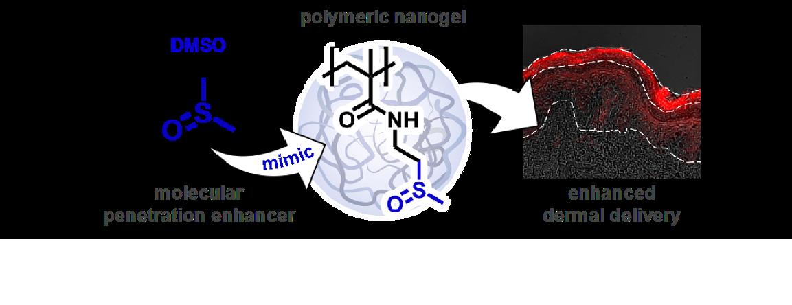 Sulfoxide-Based Nanogels for Dermal Delivery