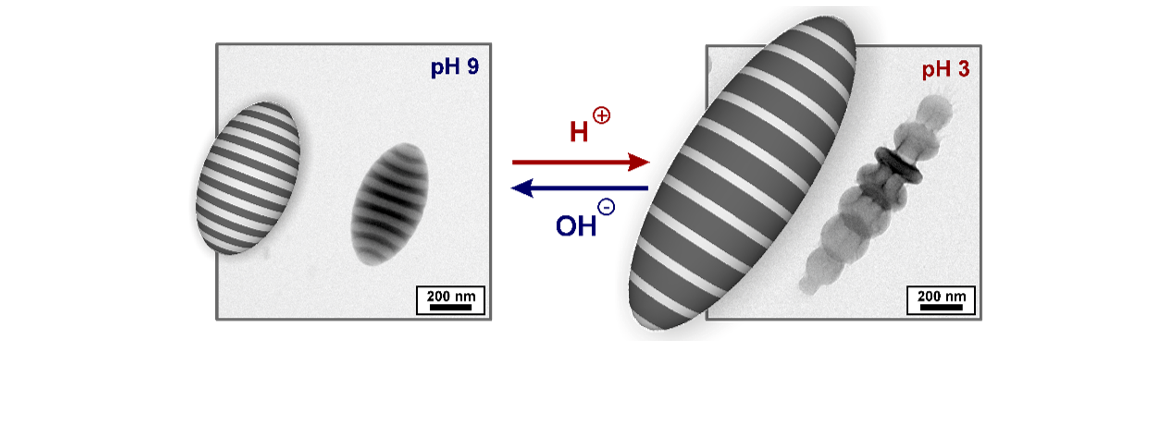 Dynamic Shape Changing Particles from BCP Self-Assembly