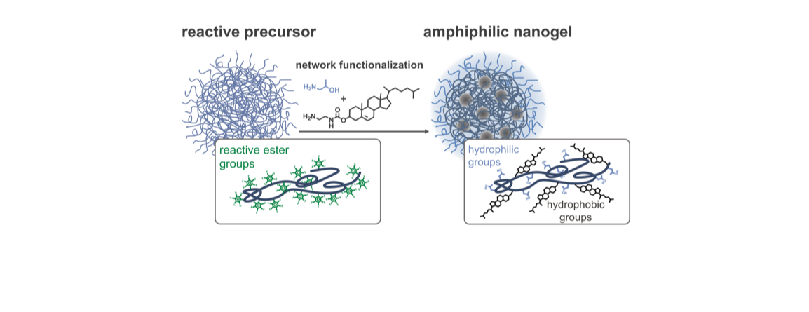 A Versatile Synthetic Platform for Amphiphilic Nanogels with Tunable Hydrophobicity