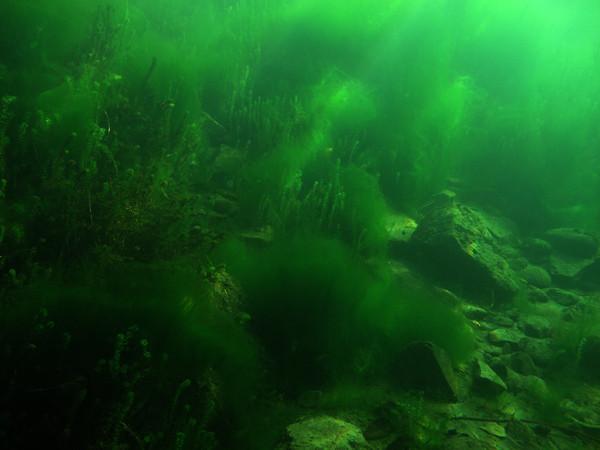 Noch genissen wir die Ruhe und die schöne Unterwasserwelt...