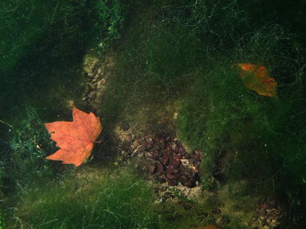 Ja und der Herbst hält auch hier unten Einzug