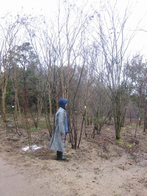 シンボルツリーの検討。立ってもらい高さを確認。