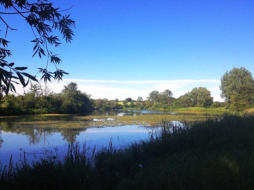Am idyllischen Rother Teich muss ich an Zecken denken
