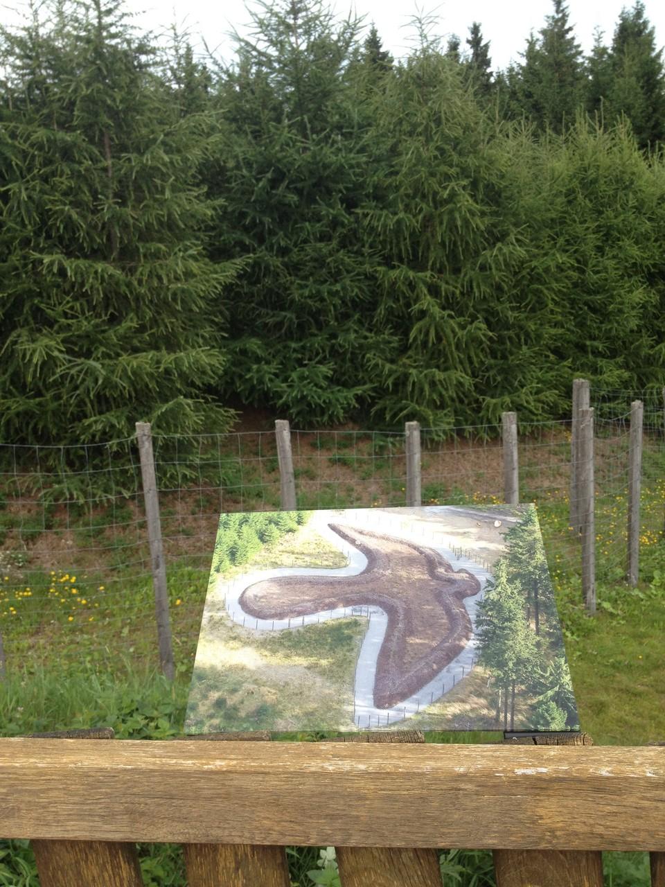 """Waldskulpturenweg: Skulptur """"Der Falke"""""""