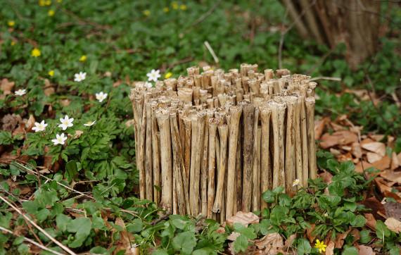 Landart Kunst in der Natur ahornblatt Brigitta Backhaus Gummersbach Springkraut
