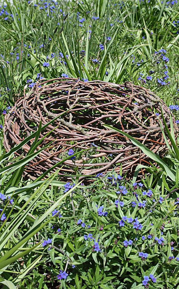Nest aus Magnolienzweigen     Foto. Ahornblatt