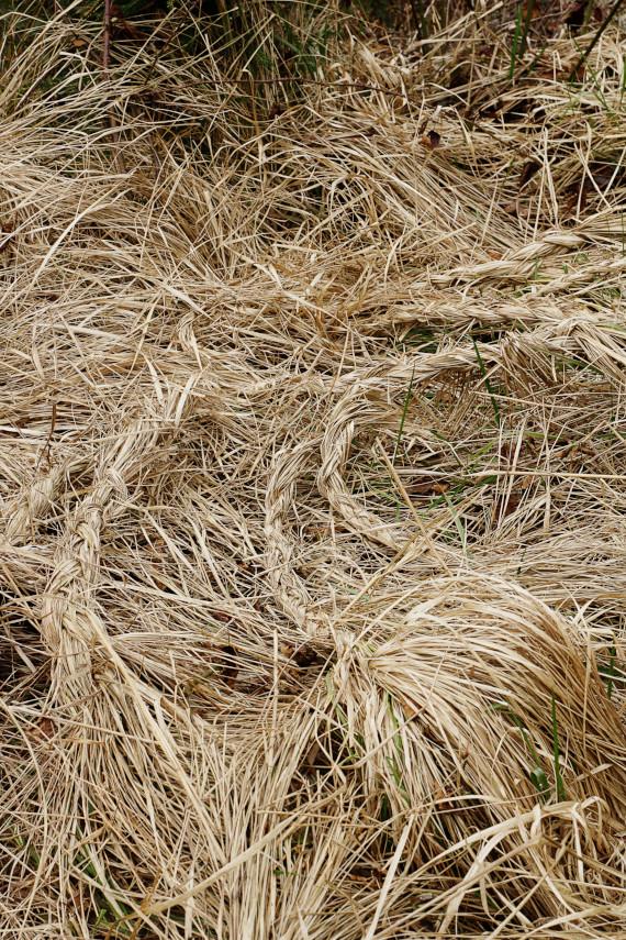 Landart Kunst in der Natur ahornblatt Brigitta Backhaus Gummersbach geflochten Gras
