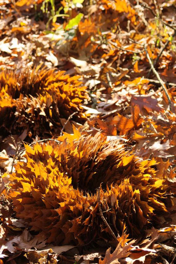 Landart Kunst in der Natur ahornblatt Brigitta Backhaus Gummersbach Blätter Herbst Kranz Objekt