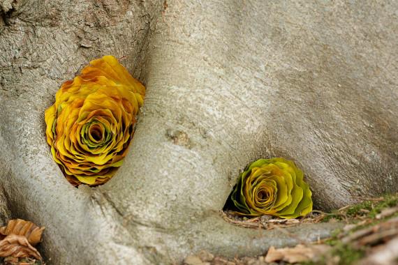 Landart Kunst in der Natur ahornblatt Brigitta Backhaus ahornblatt Gummersbach Blätter bunt