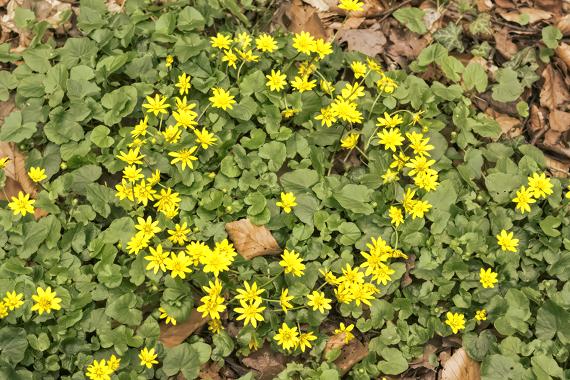 landart Kranz Blüten