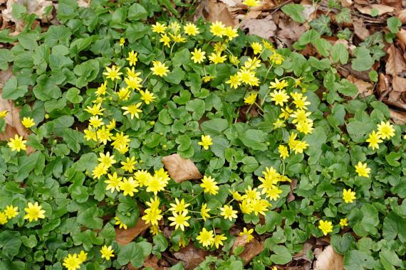 Landart Kunst in der Natur ahornblatt Brigitta Backhaus  Gummersbach Blüten