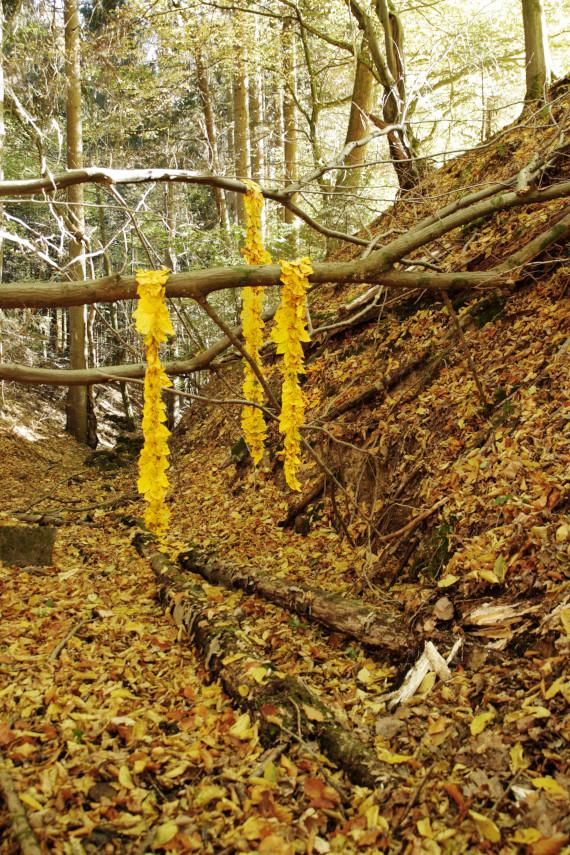 Landart Kunst in der Natur ahornblatt Brigitta Backhaus ahornblatt Gummersbach Blätter Linien
